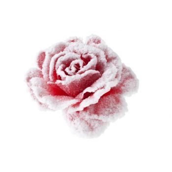 Cosy @ Home Rose Auf Clip Rose Mit Schnee D10cm